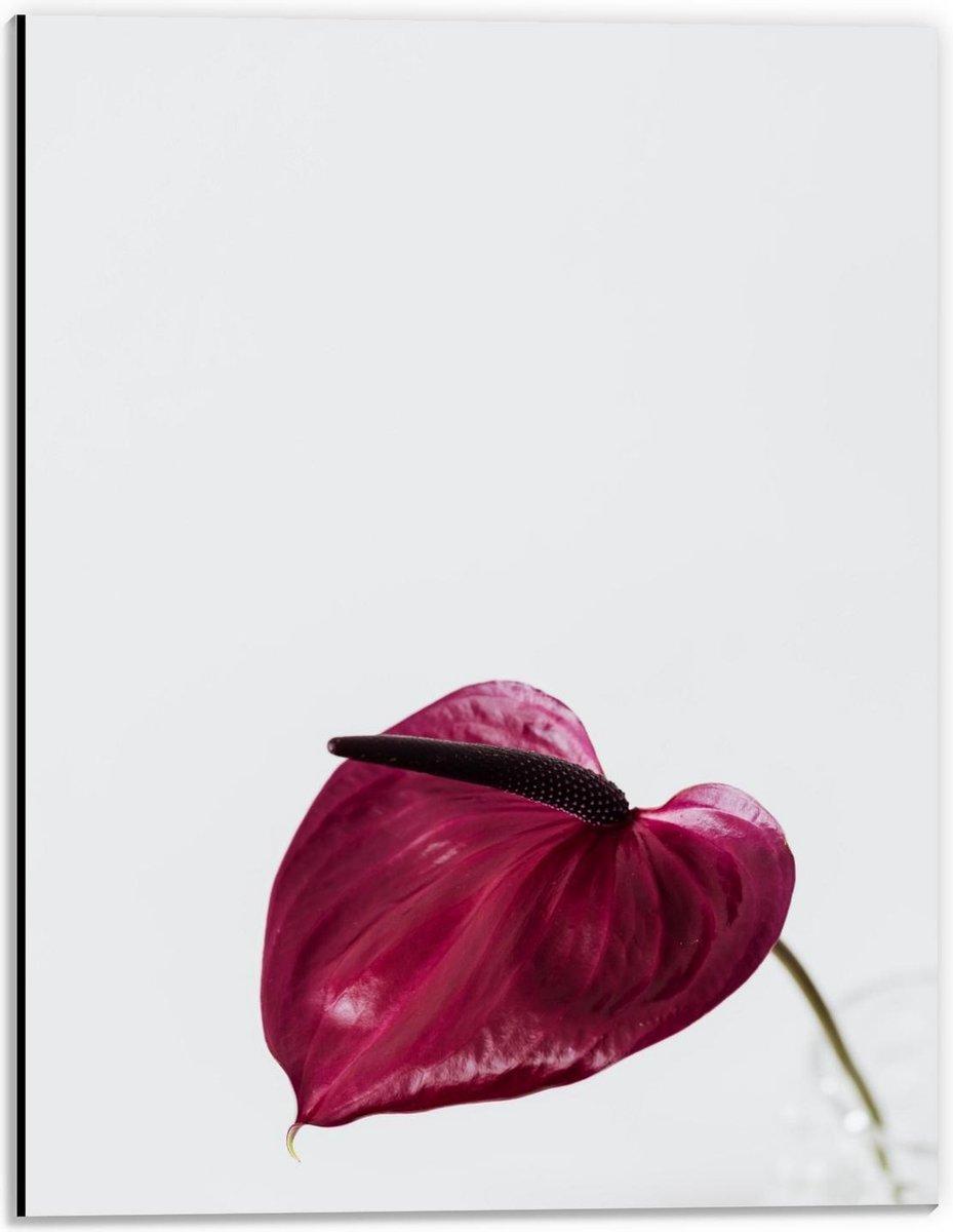 Dibond - Paars/Roze Blad - 30x40cm Foto op Aluminium (Wanddecoratie van metaal)
