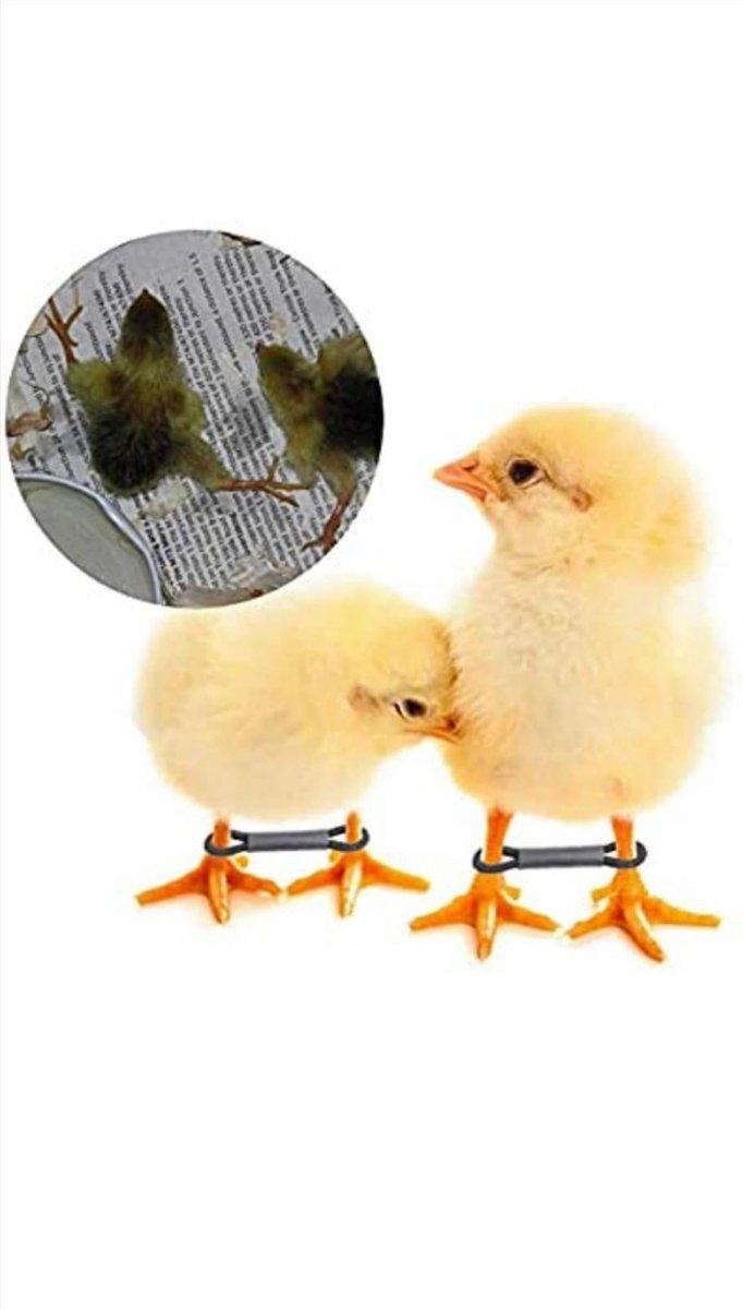 6 x Kip Kuikens Spreidpoten beugels - herstel spreidpoten in 24/48 uur - voor kippen - kwartels - du