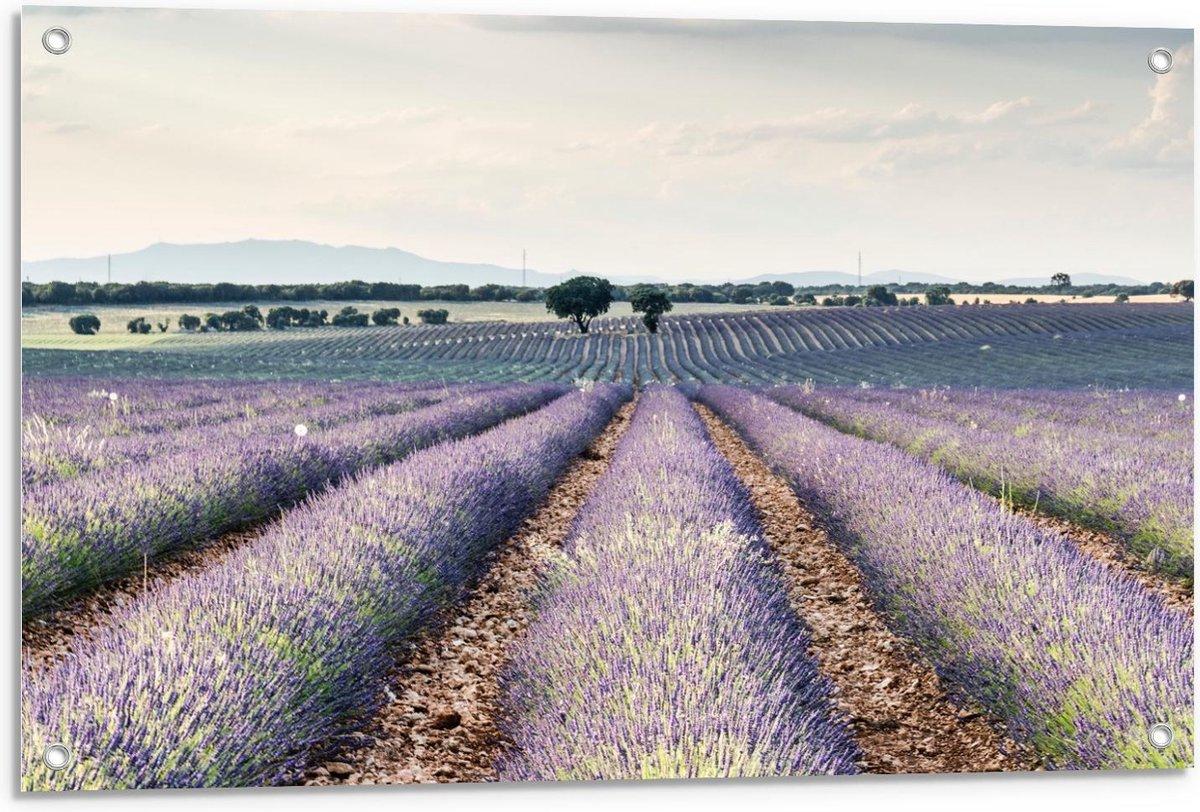 Tuinposter   Lavendel Velden  - 90x60cm Foto op Tuinposter  (wanddecoratie voor buiten en binnen)