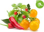 Click & Grow fruit & veggie mix