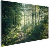 Zonnige oktobermorgen in het bos Glas 180x120 cm - Foto print op Glas (Plexiglas wanddecoratie) XXL / Groot formaat!