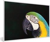 Foto in lijst - Close-up van een blauwkeelara met zwarte achtergrond fotolijst wit 60x40 cm - Poster in lijst (Wanddecoratie woonkamer / slaapkamer)
