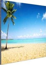 Een kokospalm bij de zee Aluminium 90x60 cm - Foto print op Aluminium (metaal wanddecoratie)
