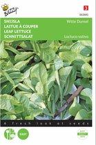 Snijsla Witte Dunsel - Lactuca sativa - set van 6 stuks