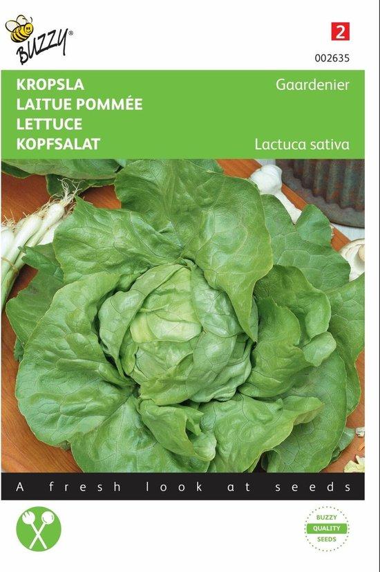 Kropsla Gaardenier -  Lactuca sativa - set van 8 stuks