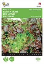 Buzzy® Pluksla Red Salad Bowl, Rode Eikenblad