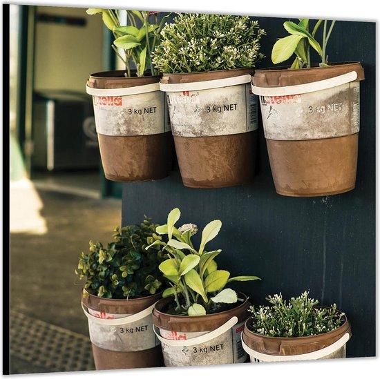 Dibond –Potjes met Planten aan de Muur– 50x50 Foto op Aluminium (Met ophang)