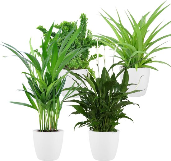 Plantenmix 'Air So Pure' - 4 kamerplanten - Areca, Chlorophytum, Nephrolepis, Spathiphyllum - ↕25-30cm - Incl. Elho Sierpot Pot-ø 12cm