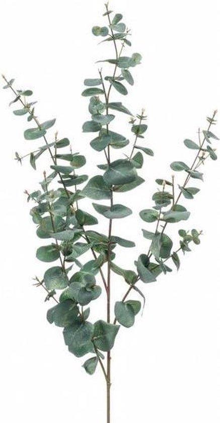 5 stuks Eucalyptus takken 1m lengte