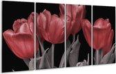 Glasschilderij Tulp   Rood, Grijs, Zwart   160x80cm 4Luik   Foto print op Glas    F004489
