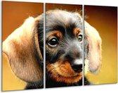 Canvas schilderij Hond | Bruin, Geel, Zwart | 120x80cm 3Luik