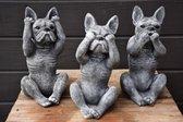 Franse bulldog horen zien zwijgen van beton