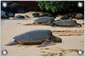Tuinposter –Schildpadden op het Strand– 120x80 Foto op Tuinposter (wanddecoratie voor buiten en binnen)