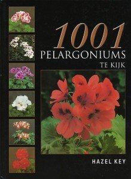 1001 Pelargoniums Te Kijk - Hazel Key |
