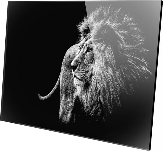 Bol Com Leeuw Zwart Wit Foto Op Plexiglas Wanddecoratie 150cm X 100cm Schilderij