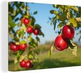 Appels aan de boom Canvas 40x30 cm - klein - Foto print op Canvas schilderij (Wanddecoratie woonkamer / slaapkamer)