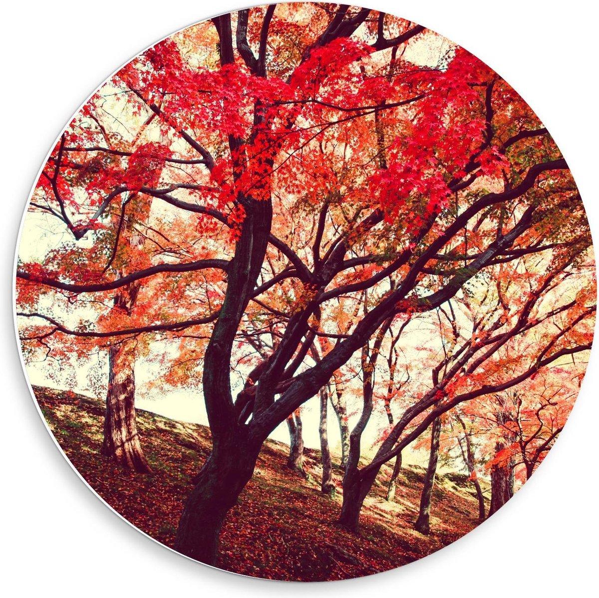 Forex Wandcirkel - Rij met Bomen met Rode Herfstbladeren - 50x50cm Foto op Wandcirkel (met ophangsysteem)
