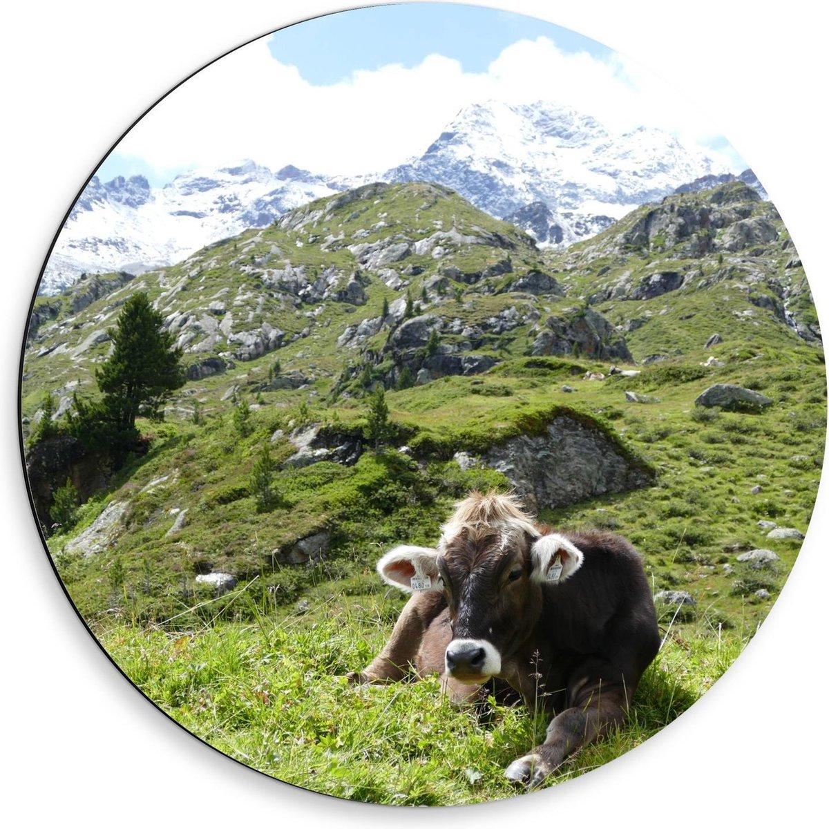 Dibond Wandcirkel - Liggende Koe in de Bergen - 50x50cm Foto op Aluminium Wandcirkel (met ophangsysteem)