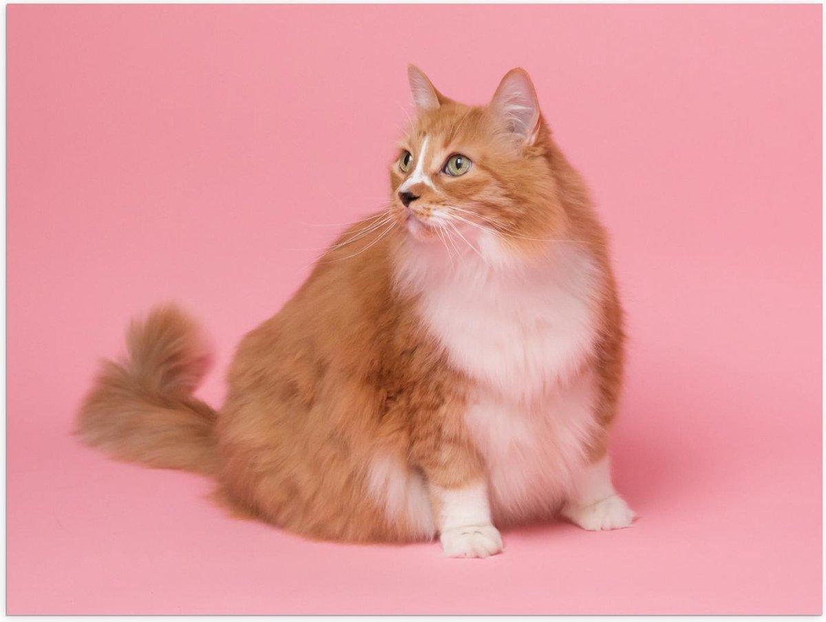 Poster – Kat op Roze Achtergrond  - 40x30cm Foto op Posterpapier