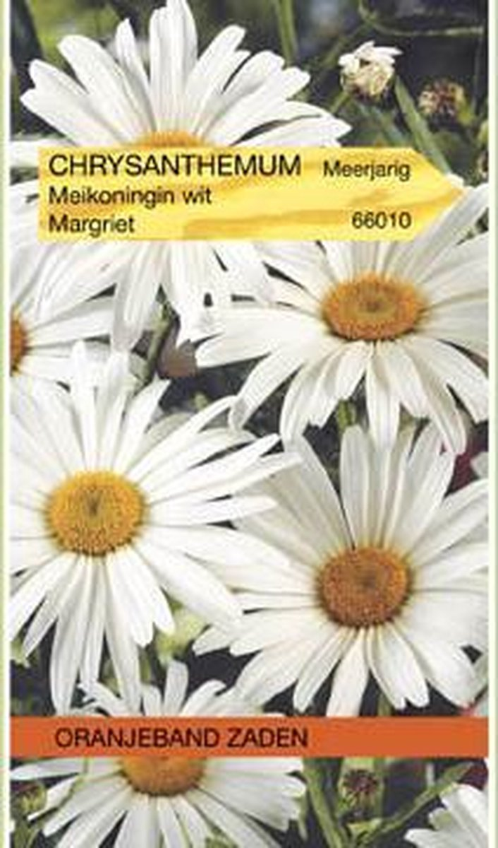OBZ 666010 Chrysanthemum Margriet Meikoningin