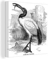 Illustratie van een heilige ibis die eet in zwart-wit 80x60 cm - Foto print op Canvas schilderij (Wanddecoratie woonkamer / slaapkamer)
