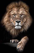 Leeuw op Plexiglas   Staand 60 x 90 cm   Dieren schilderijen   Wanddecoratie voor binnen en buiten   Lion King op Acrylglas