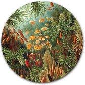 Wandcirkel Muscinae | Aluminium 120 cm | Meesterwerk van Ernst Haeckel| Ronde kunstwerken en schilderijen | Wanddecoratie voor binnen en buiten | Muurcirkel Oude Meesters op Dibond