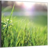 Dibond –Close Up Groen Gras -50x50 Foto op Aluminium (Met ophang