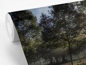 Fotobehang Mistig bos - Mistig bos tijns  zonsopkomst breedte 390 cm x hoogte 260 cm - Foto print op vinyl behang (in 7 formaten beschikbaar) - slaapkamer/woonkamer/kantoor