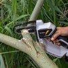 Batavia | Nexxsaw V2 toolbody - Eenhandskettingzaag Accu -kettingzaag
