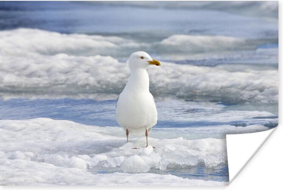 Poster -grote burgemeester staat een eilandje van ijs - 60x40 cm