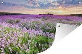 Tuinposter Bloemenvelden - Paarse bloemenzee Tuinposter 120x80 cm - Tuindoek/Buitencanvas/Schilderijen voor buiten (tuin decoratie)