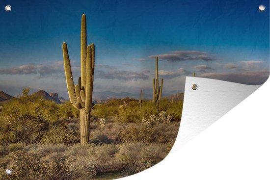 Tuinposter Cactus - Cactus bij zonsondergang in Arizona 90x60 cm - Tuindoek/Buitencanvas/Schilderijen voor buiten (tuin decoratie)