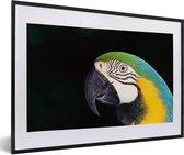 Foto in lijst - Close-up van een blauwkeelara met zwarte achtergrond fotolijst zwart met witte passe-partout 60x40 cm - Poster in lijst (Wanddecoratie woonkamer / slaapkamer)