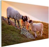 Drie schapen bij zonsopkomst Glas 180x120 cm - Foto print op Glas (Plexiglas wanddecoratie) XXL / Groot formaat!
