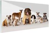 Groepsportret van honden Glas 180x120 cm - Foto print op Glas (Plexiglas wanddecoratie) XXL / Groot formaat!