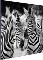 Zebra zwart wit Aluminium 120x80 cm - Foto print op Aluminium (metaal wanddecoratie)