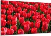 Glasschilderij Tulpen | Rood, Groen, Grijs | 120x70cm 1Luik | Foto print op Glas |  F001598