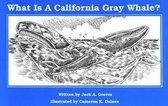 What Is A California Grey Whale?