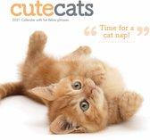 Cute Cats Kalender 2021