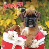 Boxer Puppies 2020 Square Wall Calendar