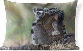 Sierkussen Lemur voor buiten - Moeder en kind lemuur kijken om zich heen - 60x40 cm - rechthoekig weerbestendig tuinkussen / tuinmeubelkussen van polyester