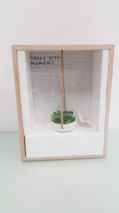 Hangend plantje in een doosje