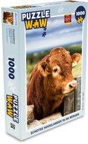 Puzzel 1000 stukjes volwassenen Schotse Hooglanders  1000 stukjes - Schotse hooglander in de bergen  - PuzzleWow heeft +100000 puzzels