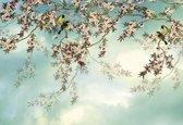 Komar Sakura Fotobehang 368x254cm