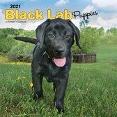 Black Labrador Puppies - Schwarze Labradorwelpen 2021 - 18-Monatskalender