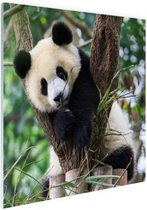 Panda welp Glas 180x120 cm - Foto print op Glas (Plexiglas wanddecoratie) XXL / Groot formaat!