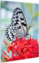 Rijstpapiervlinder Glas 120x180 cm - Foto print op Glas (Plexiglas wanddecoratie) XXL / Groot formaat!