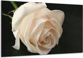 Glasschilderij Roos | Wit, Zwart, Groen | 120x70cm 1Luik | Foto print op Glas |  F000533