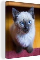 Blauwe ogen van een Siamese kat Canvas 120x160 cm - Foto print op Canvas schilderij (Wanddecoratie woonkamer / slaapkamer) / Huisdieren Canvas Schilderijen XXL / Groot formaat!
